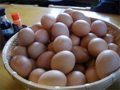 卵は食べ放題!