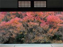 美しすぎる『紅葉』